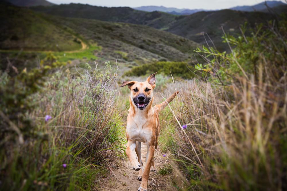 shallow-focus-shot-dog-running-pathway
